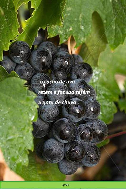 haicai da uva